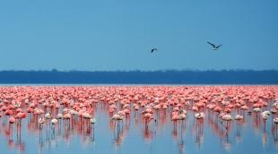 Kenya-LakeNakuru1